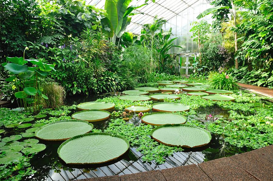 Establecer n en texcoco el jard n bot nico cozcaquauhco for Jardin botanico en sevilla