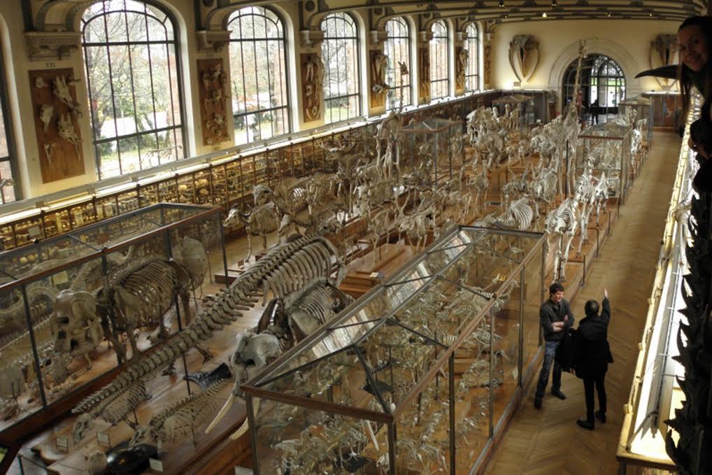 Potencia UAEM beneficios con Museo de Historia Natural de París ...
